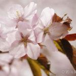 【フォトウォーク】和琴半島で春の野の花を探そう