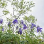 【フォトトレッキング】西別岳へ野の花を見に行こう